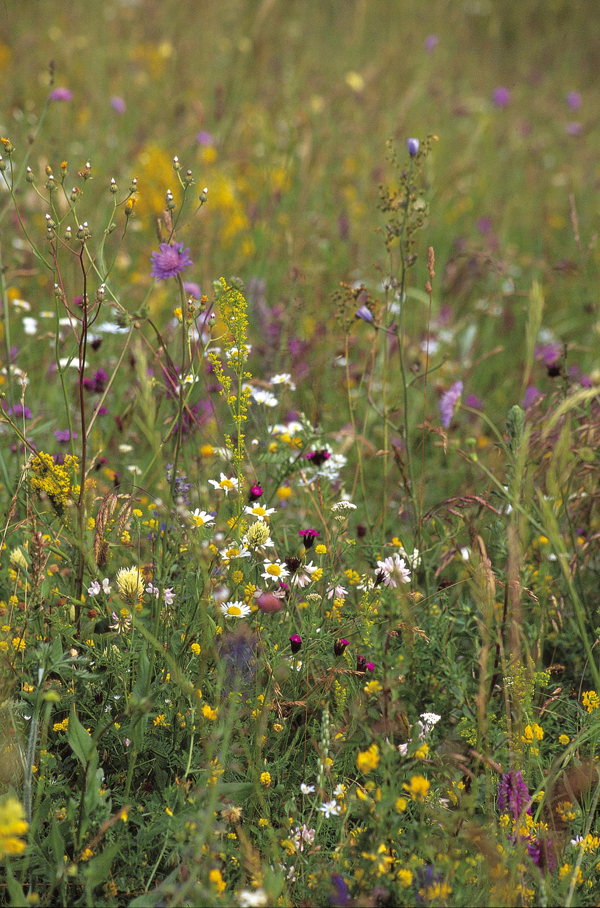 Plati pentru biodiversitate bazate pe rezultate
