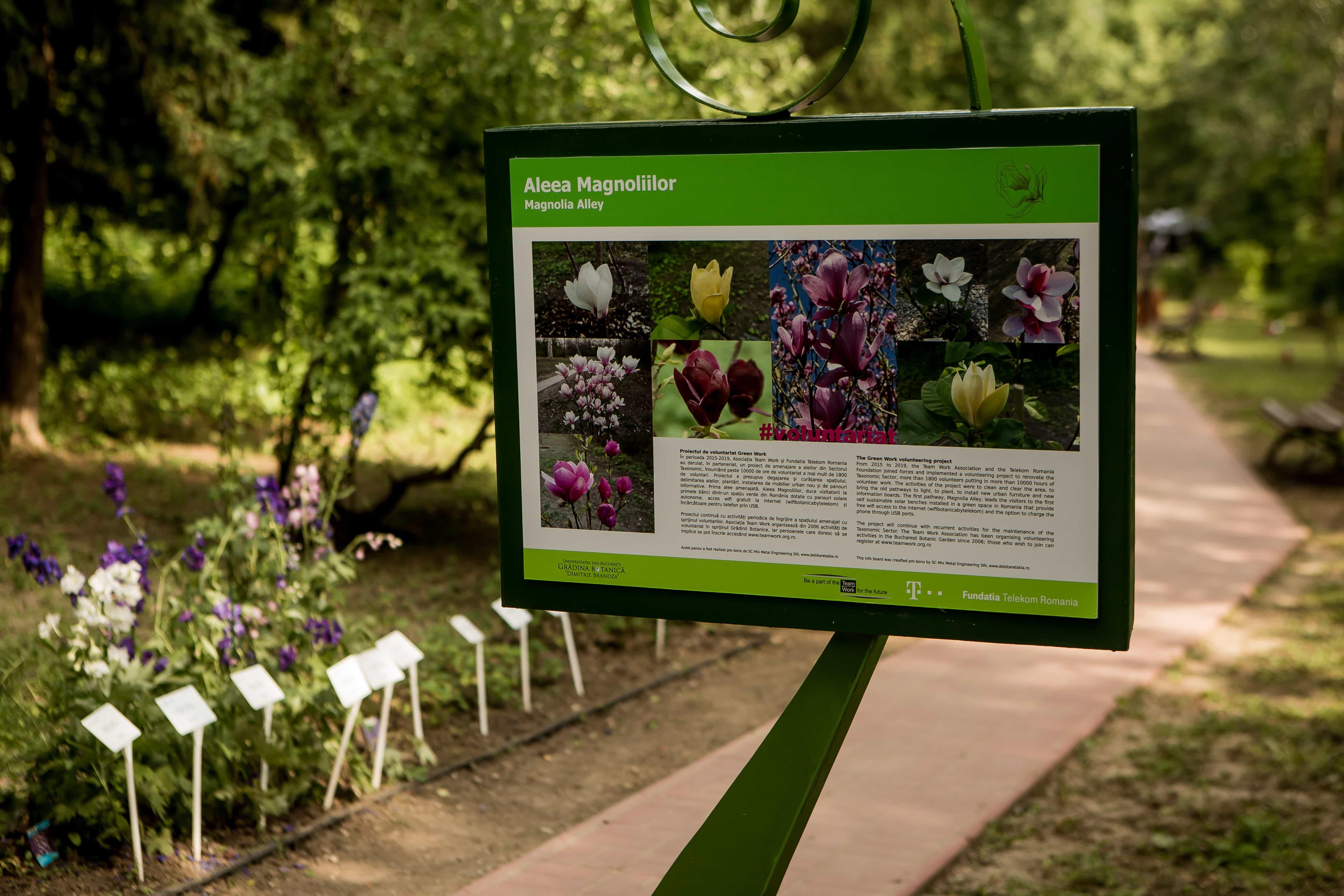 Aleea Magnoliilor